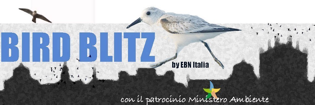 Urban Bird Blitz 2019