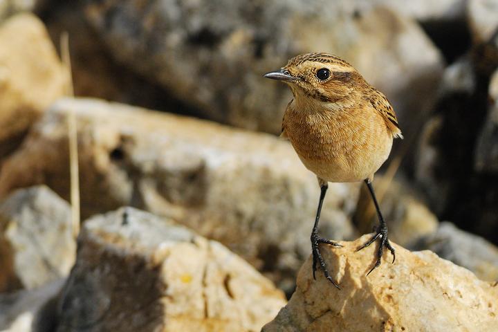 Enri Birds