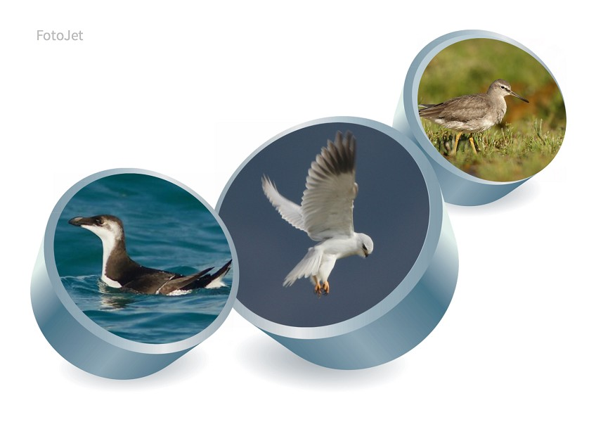 News EBN Italia il birdwatching italiano