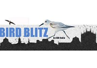 Urban Bird Blitz