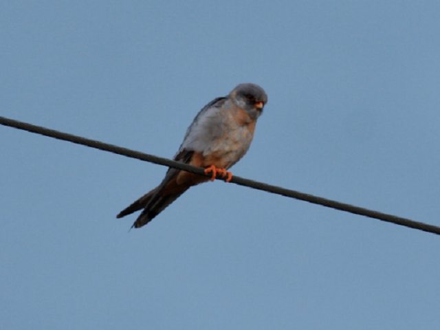 Urban Bird Blitz 2020